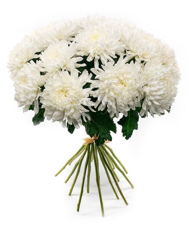 пляжный букеты из белых хризантем фото красивые акции уточняйте телефону